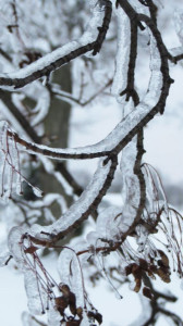 ICE-branch-Mindy-Austin-Abbott