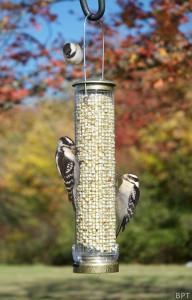 N-Birdfeeding1