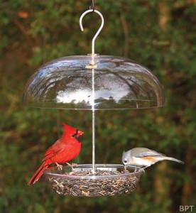 N-Birdfeeding2