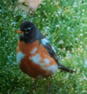 This bird was photographed by Jennifer August in Solon Township.