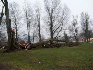 N-Storm3-Salisbury-park-mary-web