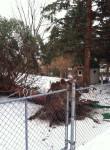 N-Storm6-tree-web