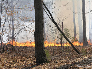 This wildfire started a house on fire in Nelson Township 5 years ago last week.