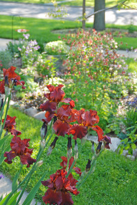 Iris and Columbine can add beauty to the landscape, but before planting anything it's important to make sure the soil is properly prepared.