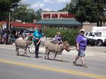 Sparta-donkeys