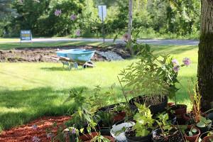 N-Rain-garden2