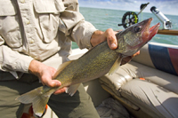 OUT-Weekly-fishing-tip-walleye-edit_original