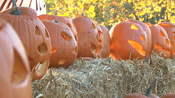 Are you ready to trick or treat in Cedar Springs?