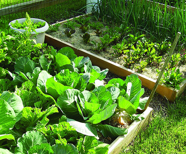gardening and green thumb essay What does the phrase 'green thumb' mean find out the phrase's definition & origin, and get examples of how to use it in a sentence.