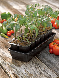 Increase success and encourage even growth by growing seedlings under artificial lights.