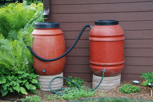 Collecting rain in rain barrels when it is plentiful and storing it until needed is an effective way to manage water for the landscape.