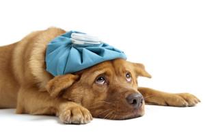 N-Canine-flu