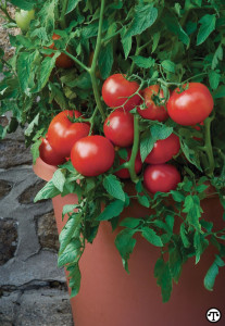 Burpee offers a wide range of flowers, vegetables and herbs to grow at home.
