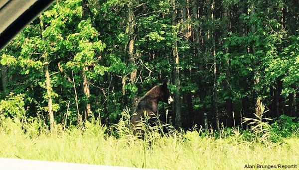 This photo of a bear was taken at the US131 exit to 14 Mile Road. It appeared on Woodtv.com.