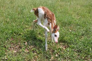 N-Deer2