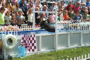 Racing pigs are back at the Kent County Youth Fair this year.