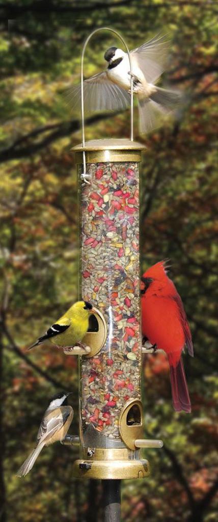 BLOOM-Attract-birds1-web