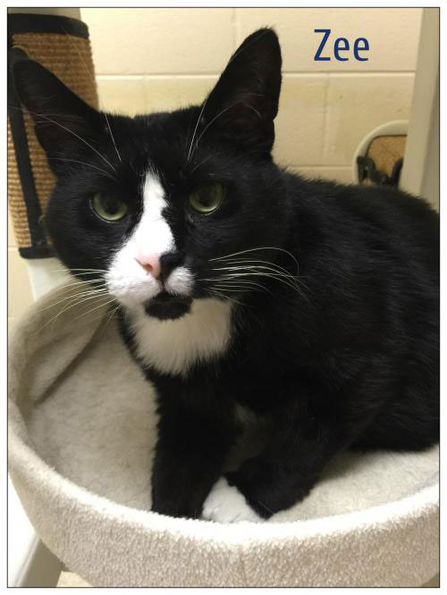 A new partnership between the Kent County Animal Shelter and Humane Society of West Michigan will give cats like Zee a better chance of being adopted. Zee is a 2-year-old black and white neutered male at the Kent County Animal Shelter, who was surrendered by his family when they moved.