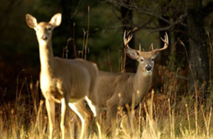 OUT-Deer-hunting-preview-web