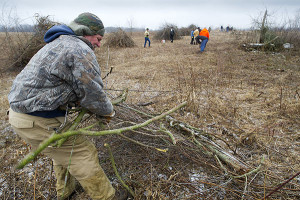 About a dozen volunteers from the Lenawee County chapter of Pheasants Forever recently showed up to work with Michigan Department of Natural Resources Parks and Recreation Division staff to take out an overgrown fence row between two grassy fields at the Lake Hudson Recreation Area. The goal is to create a large block of land that will be more hospitable to not only pheasants, but other grasslands residents as well. Pheasants Forever member Ken Parts helps clear a fence line in between two large grass fields.