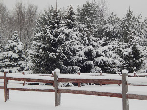 SnowyPines-fence