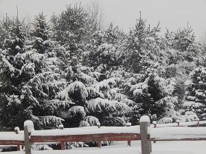 SnowyPines-fence2