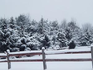 SnowyPines-fence3