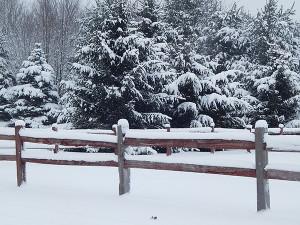 SnowyPines-fence4