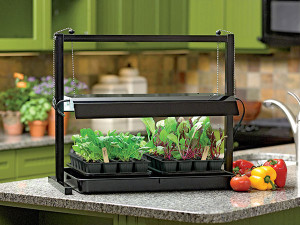 Photo courtesy of Gardener's Supply Company Energy efficient and long lasting high intensity grow lights will provide the greatest yields when growing tomatoes and other fruiting plants indoors.