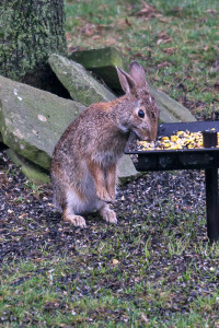 OUT-Feeding-more1-bunny