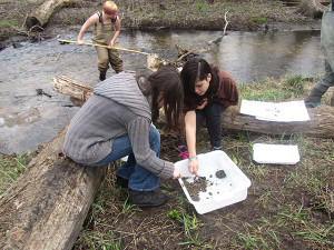Students identify and count bugs found in Cedar Creek. Photo by J. Reed.