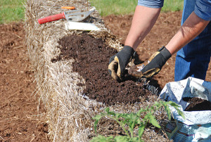 Photo by: Melinda Myers, LLC