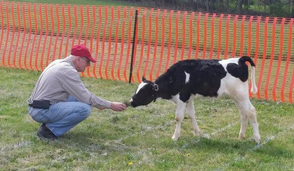 Rotary member John Rohrer with Ana the calf.