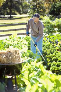 Low maintenance gardening. Intensive planting rows.