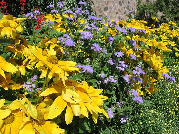 Jardinería: plantas para amar | Alabama Living Magazine