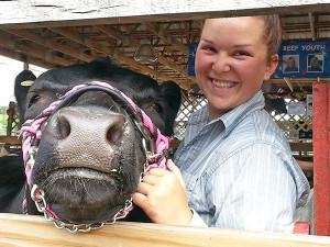 Samantha Plank, a Montcalm Community College student dual enrolled in Michigan State University's agricultural operations program, shows her cow at the Montcalm County 4-H Fair.