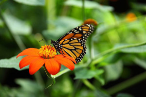 OUT-Boost-bees-and-butterflies