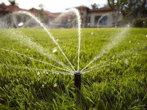 With the right watering techniques, you can save water, money and time while maintaining a healthy lawn.