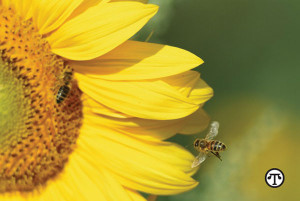 You can help pollinator friends on National Honey Bee Day, National Honey Month and all year long.