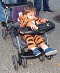 hal-trunk-or-treat-tiger