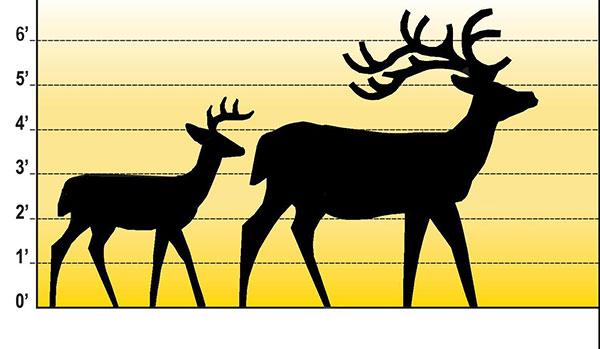 out-deer-elk1-size-comparison