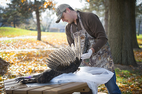 Gourmet Gone Wild executive chef Dan Nelson begins to pluck feathers from a wild turkey. Photo from Michigan Department of Natural Resources.