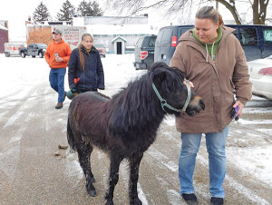 This mini horse escaped his home on 18 Mile in Nelson Township and headed to town last Friday, December 16. Gizmo is shown here with his owner, Ann Hughes. Post photo by J. Reed.