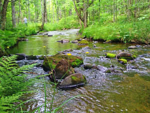 About 3.5 miles of the Pilgrim River, a cold-water trout stream, flow through the Pilgrim River Forest property. A conservation easement is in the process of being acquired here. Michigan Department of Natural Resources