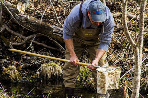 Trout Unlimited National and Michigan Trout Unlimited will be holding a Stream Insect Monitoring Event on Saturday, May 6 at the Rockford Community Cabin.