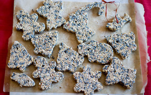Bird Seed Cookies. Photo by Heather Katsoulis.