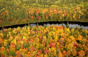 Tahquamenon River fall forest: An aerial view of the Tahquamenon River and the surrounding fall forest, a popular tourist destination in the eastern end of Michigan's Upper Peninsula.