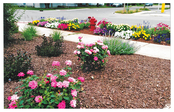 The Cedar Springs Garden Club Is Celebrating Completion Of Newly Designed Community Flower Located In Center Town It Brightens