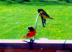 National bird-feeding month