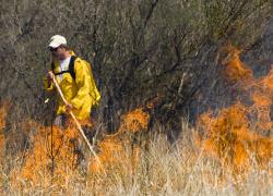 Fire, jack pine and aspen: understanding a historic relationship